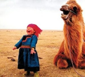 laughing-camel